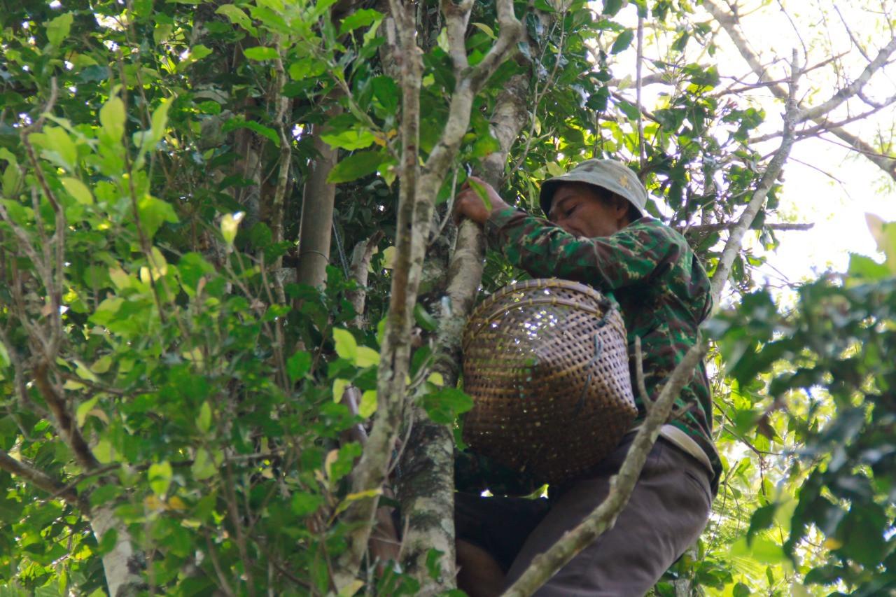 petani-kemiriombo-harapkan-hasil-terbaik-dari-vanili--