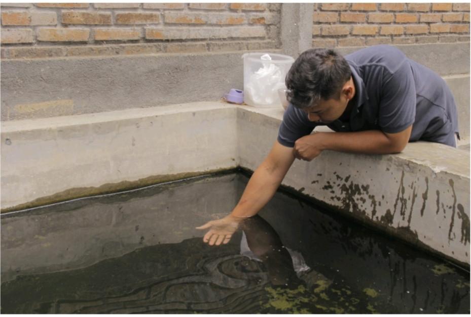 ikan-endemic-yang-jarang-dijumpai-di-pasar-perikanan-indonesia