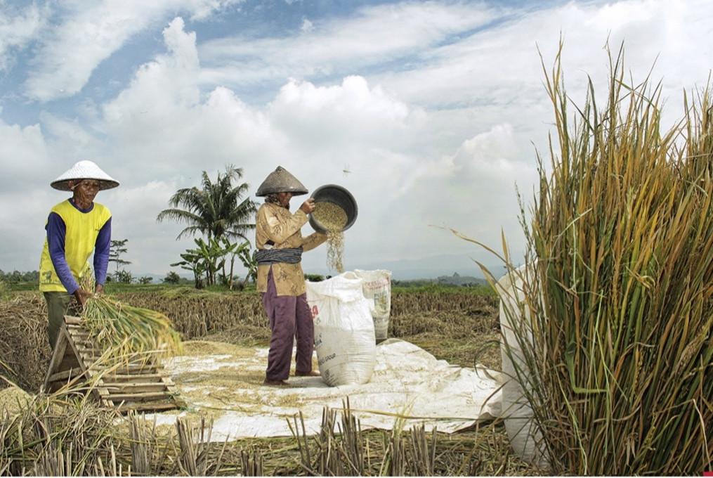 bupati-minta-perkuat-ketahanan-pangan-di-masa-pandemi